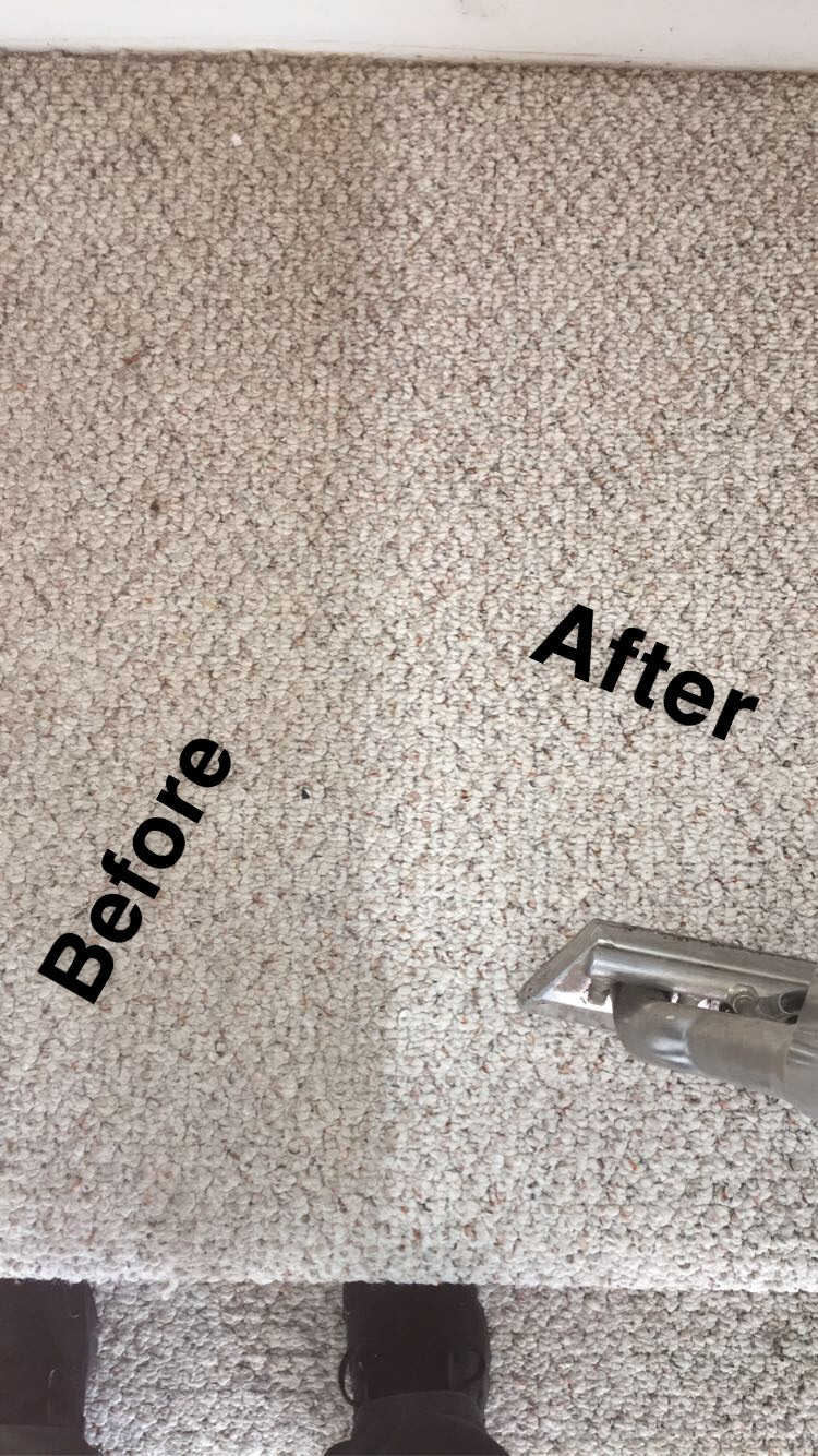 Stanley Steemer Rockford carpet cleaning before and after