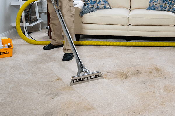 Stanley Steemer deep cleaning light colored carpet with dark stain
