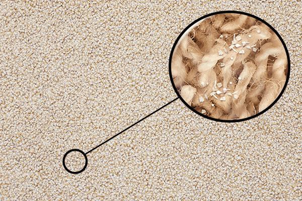 Carpet zoomed in on depiction of dander