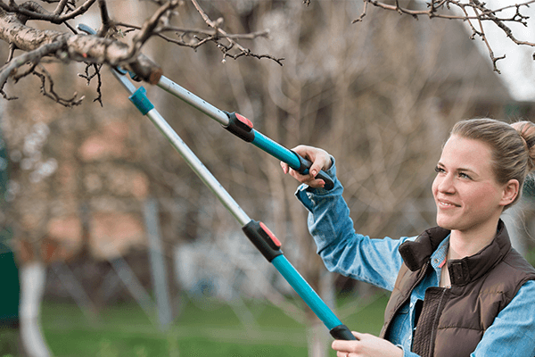 Woman trimming tree branches for the winter
